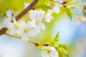 asla printemps4